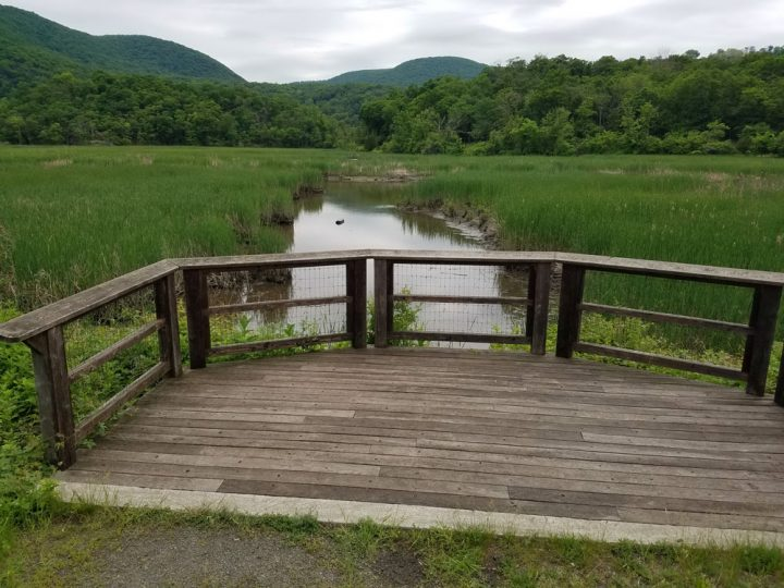 TAKE ACTION — Support a NY State Bill to Better Protect Our Wetlands & Drinking Water